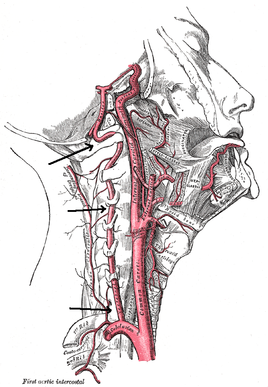 Upper Cervical Spine: Anatomy and Assessment